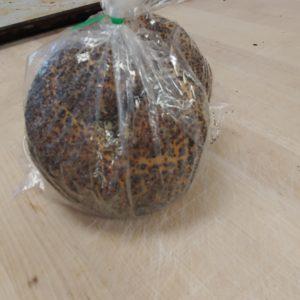 bagels-hillcrest-bakery-white-rock